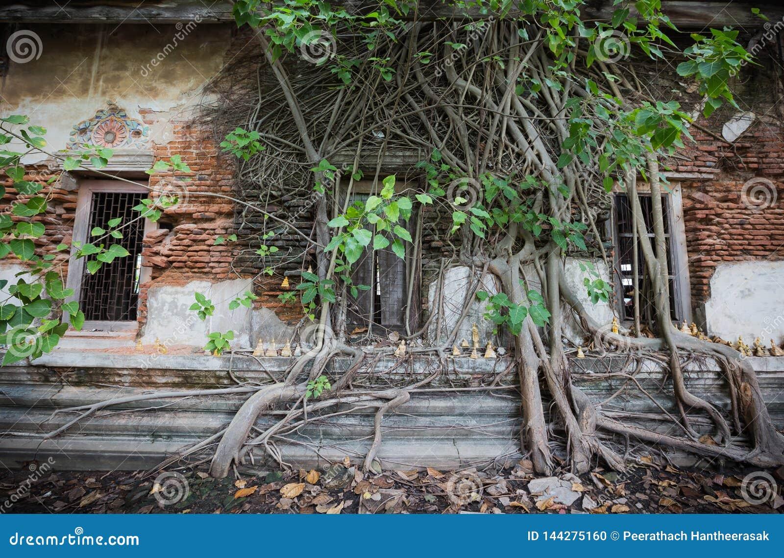 Dilapidated church in Wat Rat Bamrung Wat Ngon Kai - Samut Sakhon, Thailand