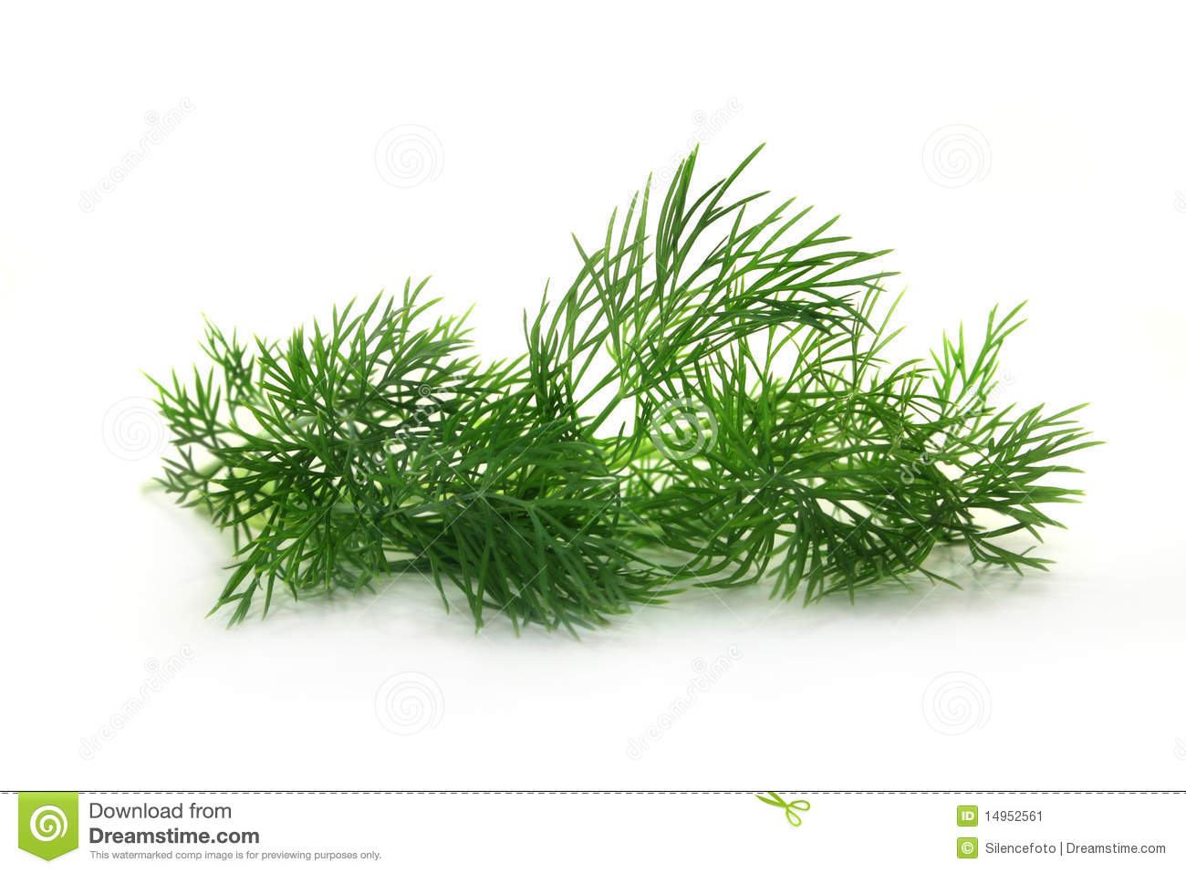 Dill stock image image 14952561 - Tips planting herbs lovage parsley dill ...