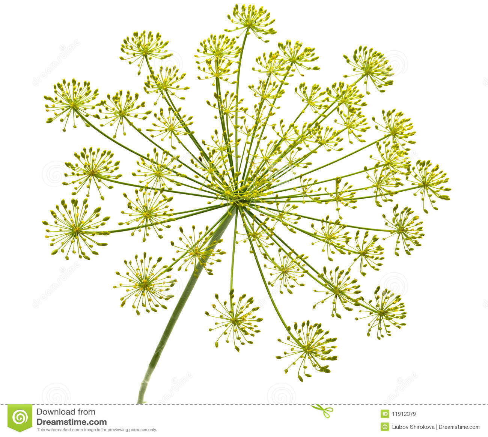Organic Nature Pattern