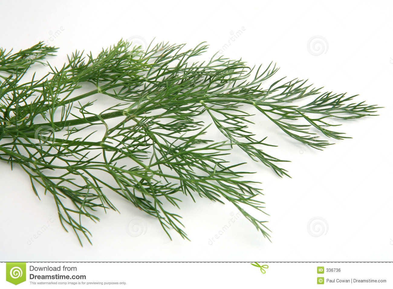 how to cut dill weed