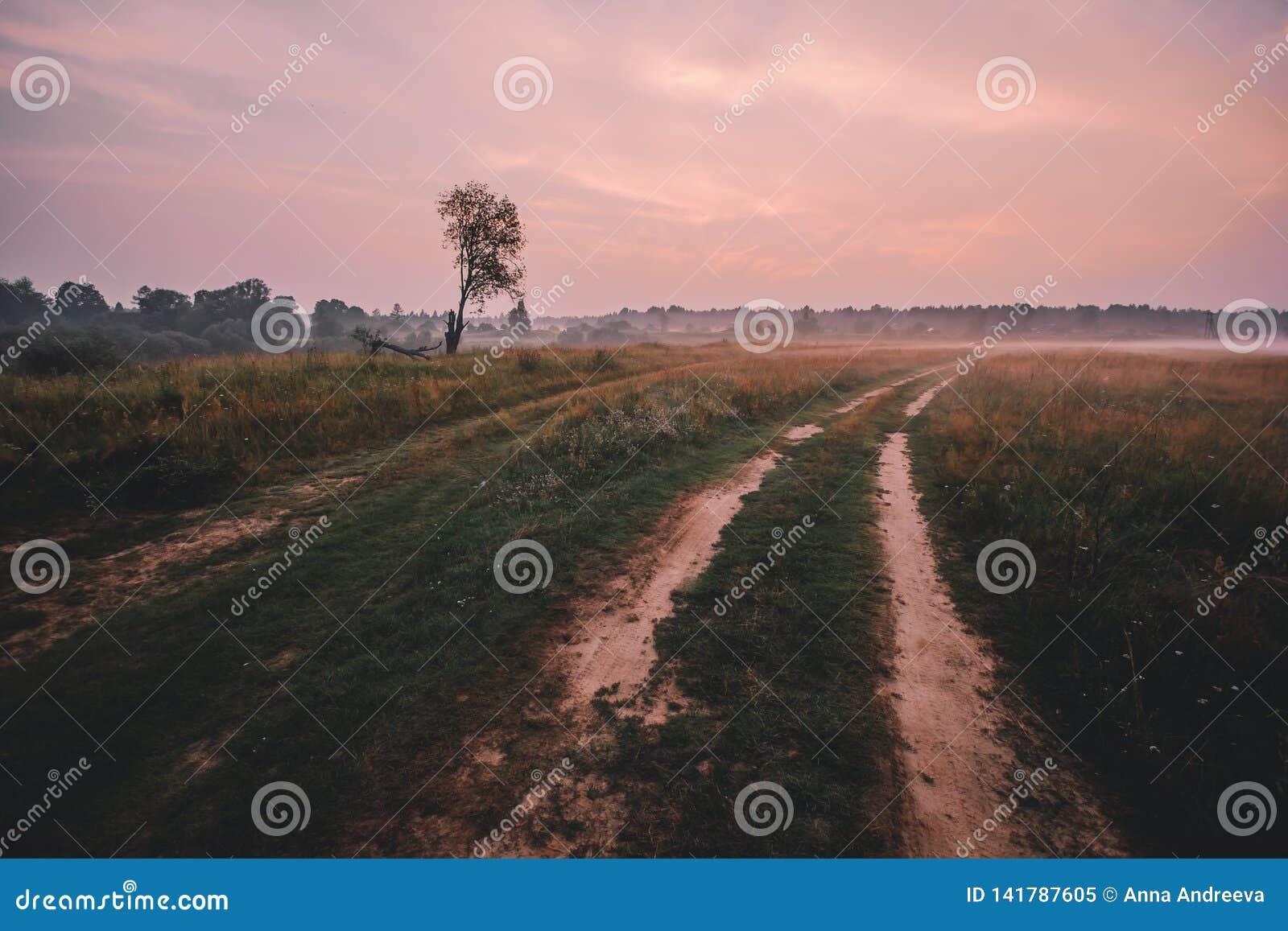Dimma över landsvägen och ensamt träd utan sidor med solnedgången på bakgrund