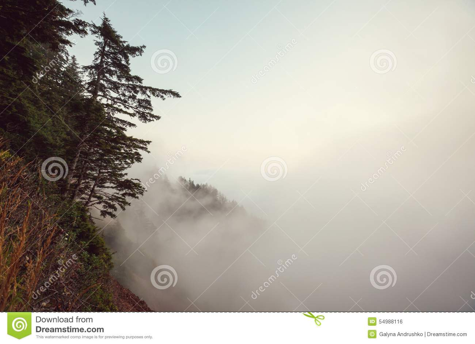 Dimma i skog