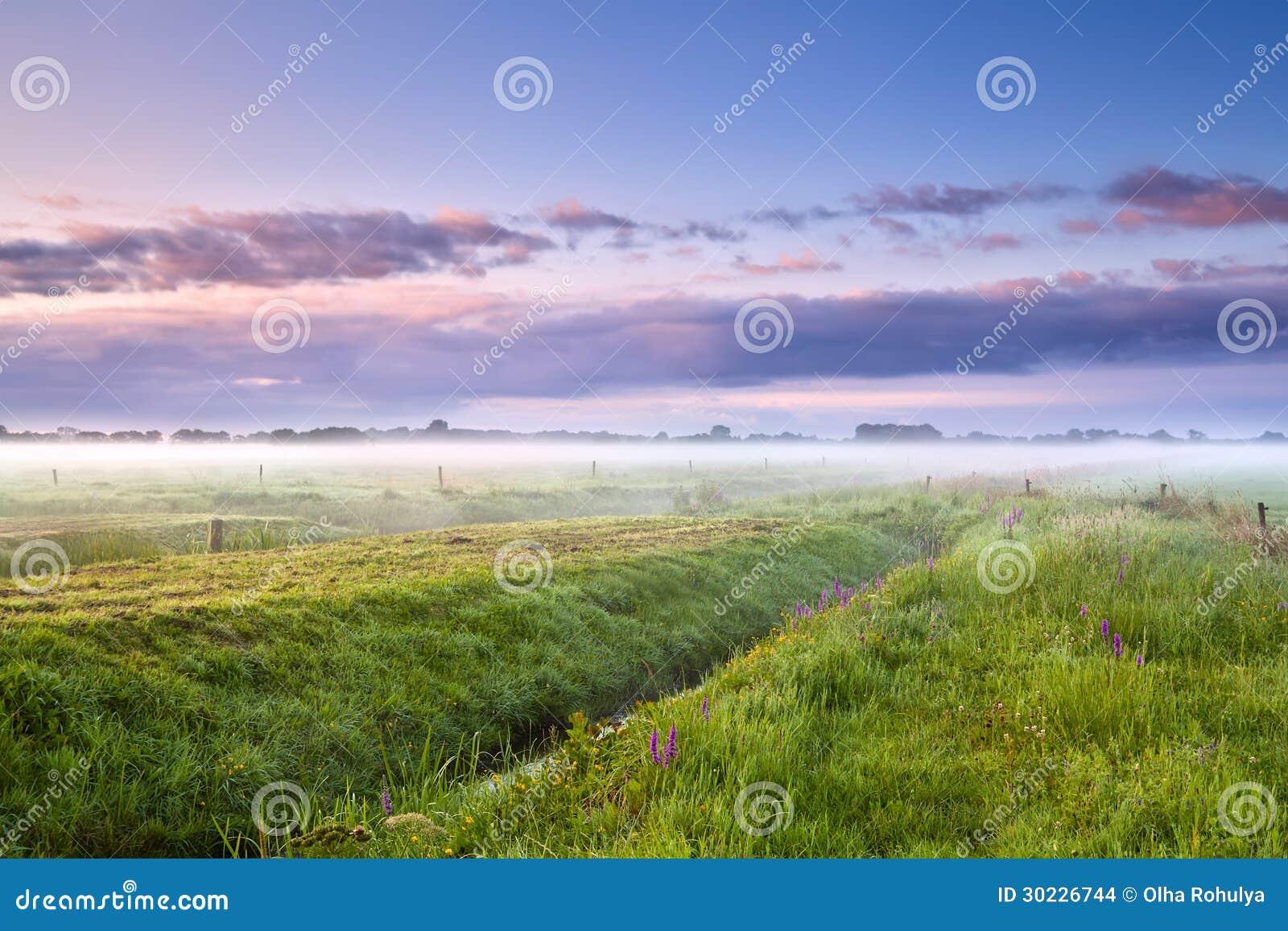 Dimmig morgon för sommar över ängar