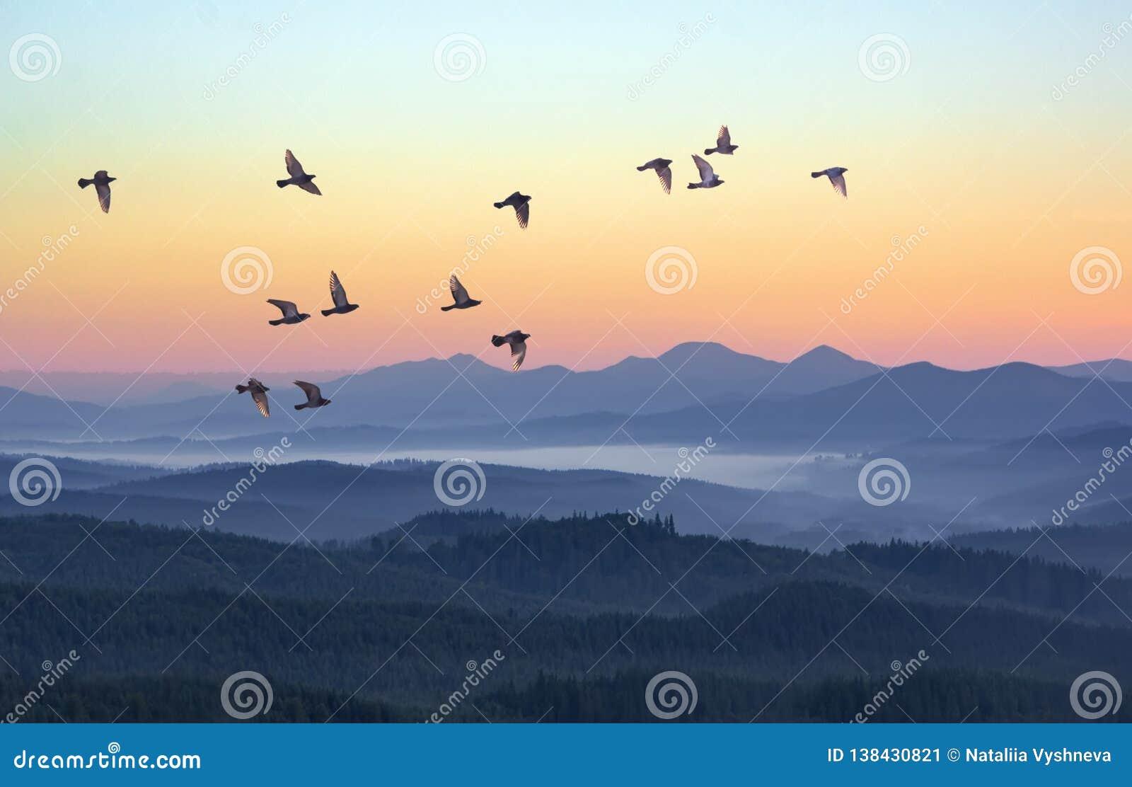 Dimmig morgon i bergen med flygfåglar över konturer av kullar Serenitetsoluppgång med mjukt solljus och lager av ogenomskinlighet