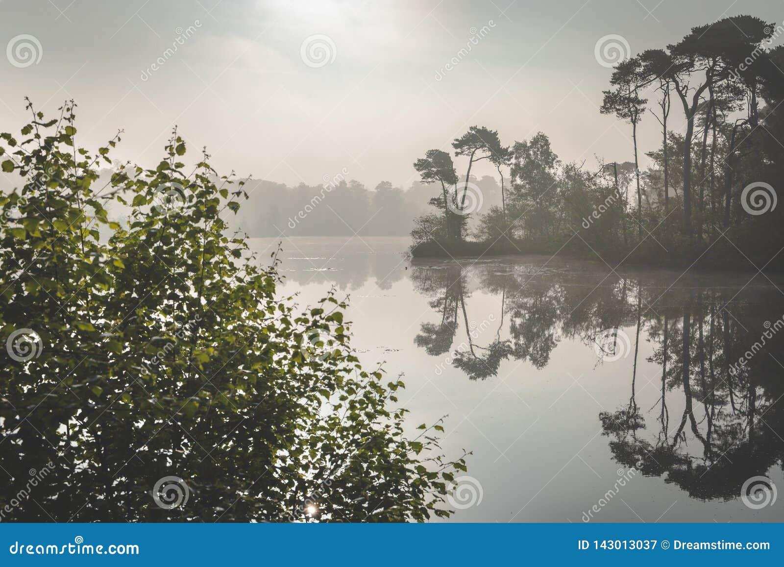Dimmig morgondimma över sjön Solljus som kommer till och med dimman Zonsopkomst över meer i Oisterwijkse Bossen en Vennen
