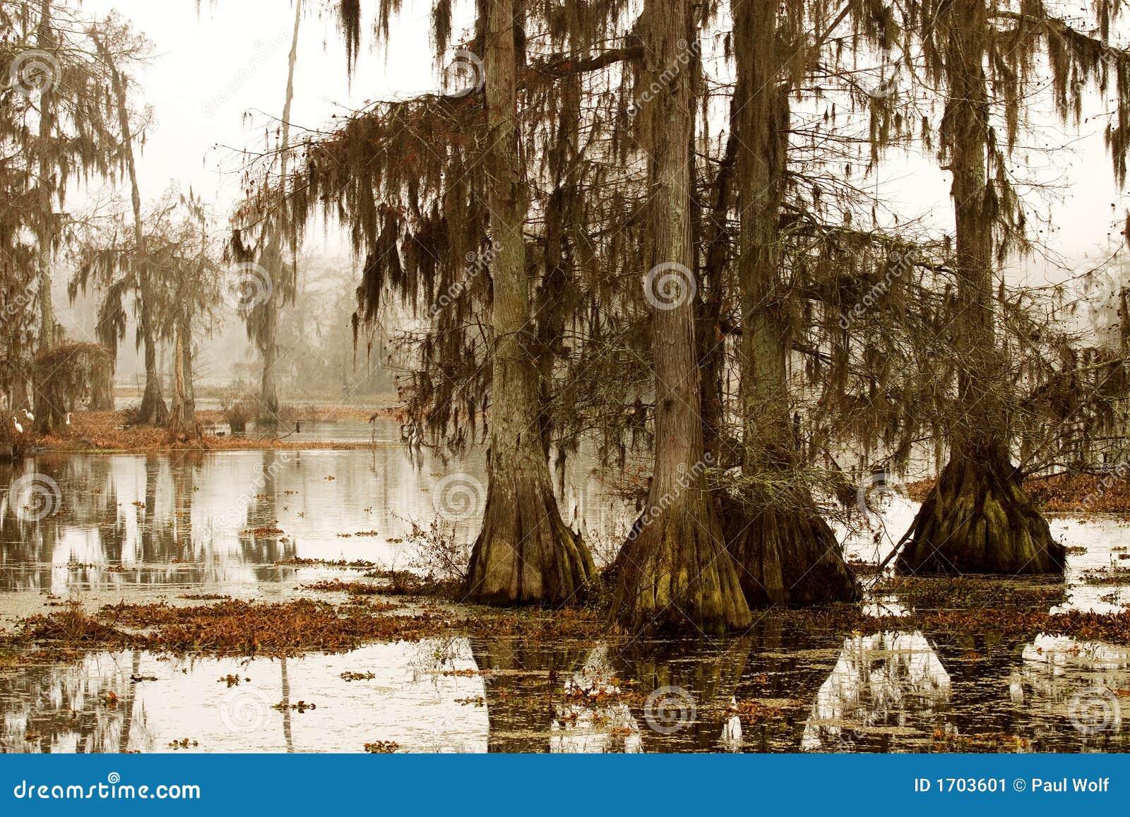 Dimmig morgonswamp