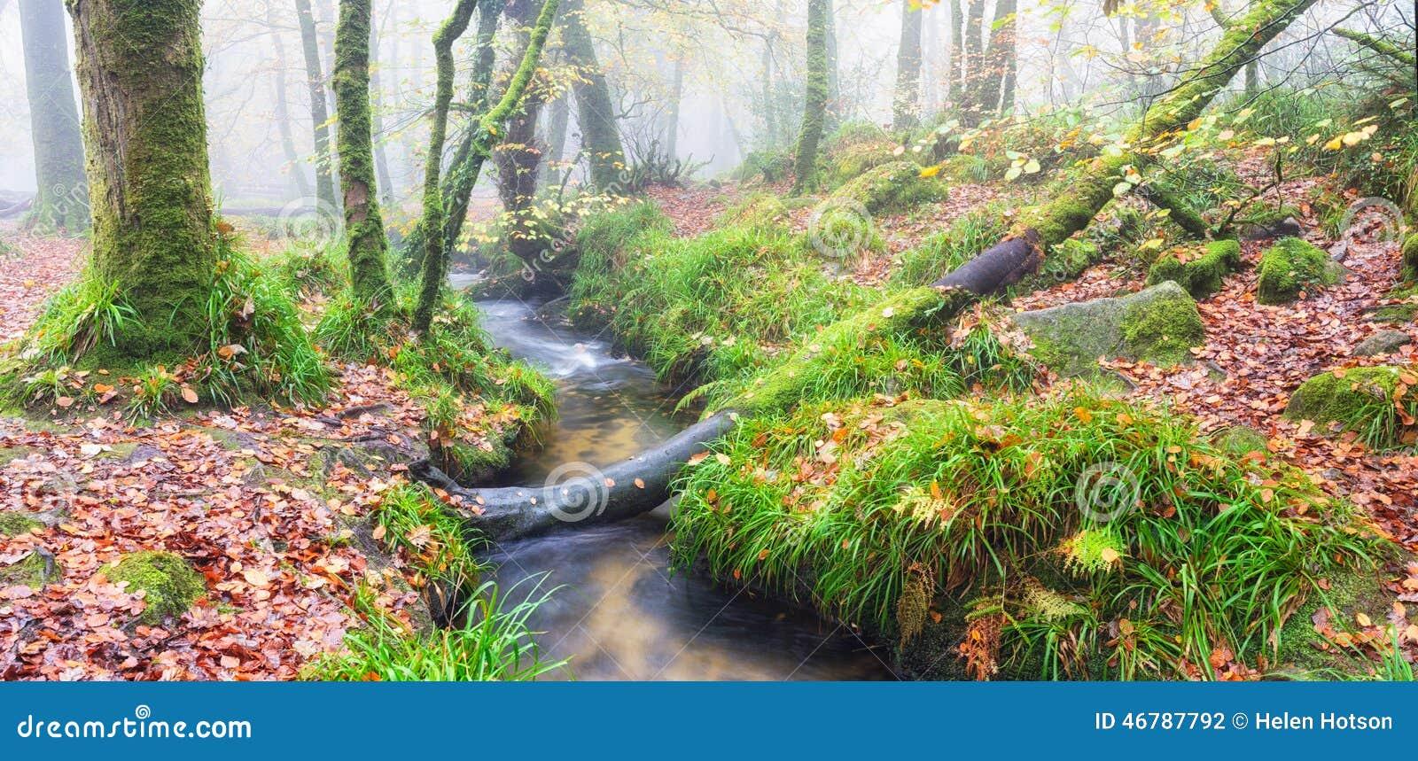 Dimmig skog för höst