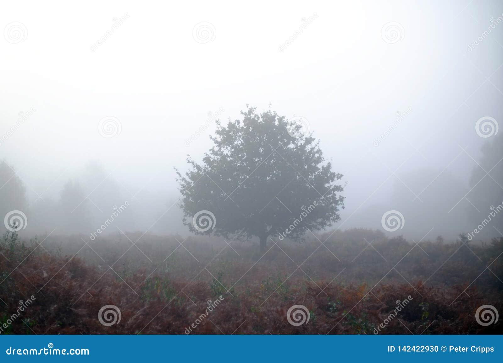 Dimmig tree