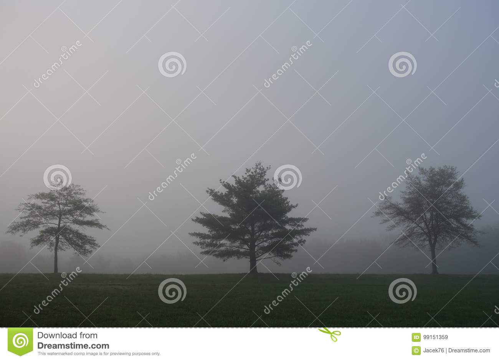 Dimmiga trees