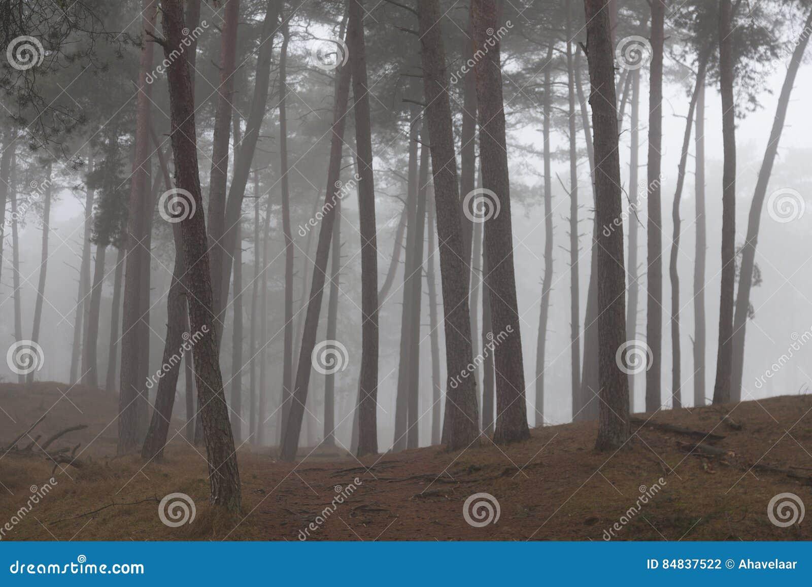 Dimmigt sörja träd och den insnöade vintern på hed nära zeist i nen