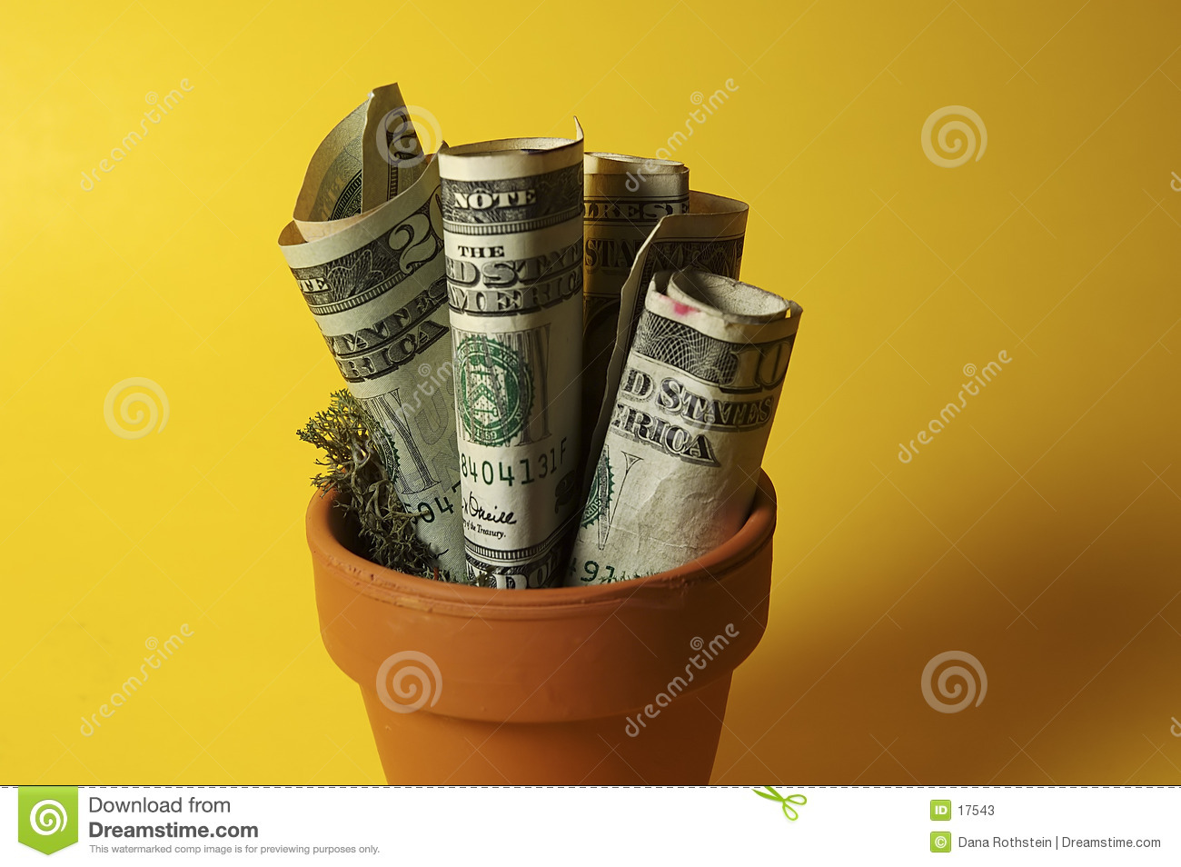 Dinero Potted