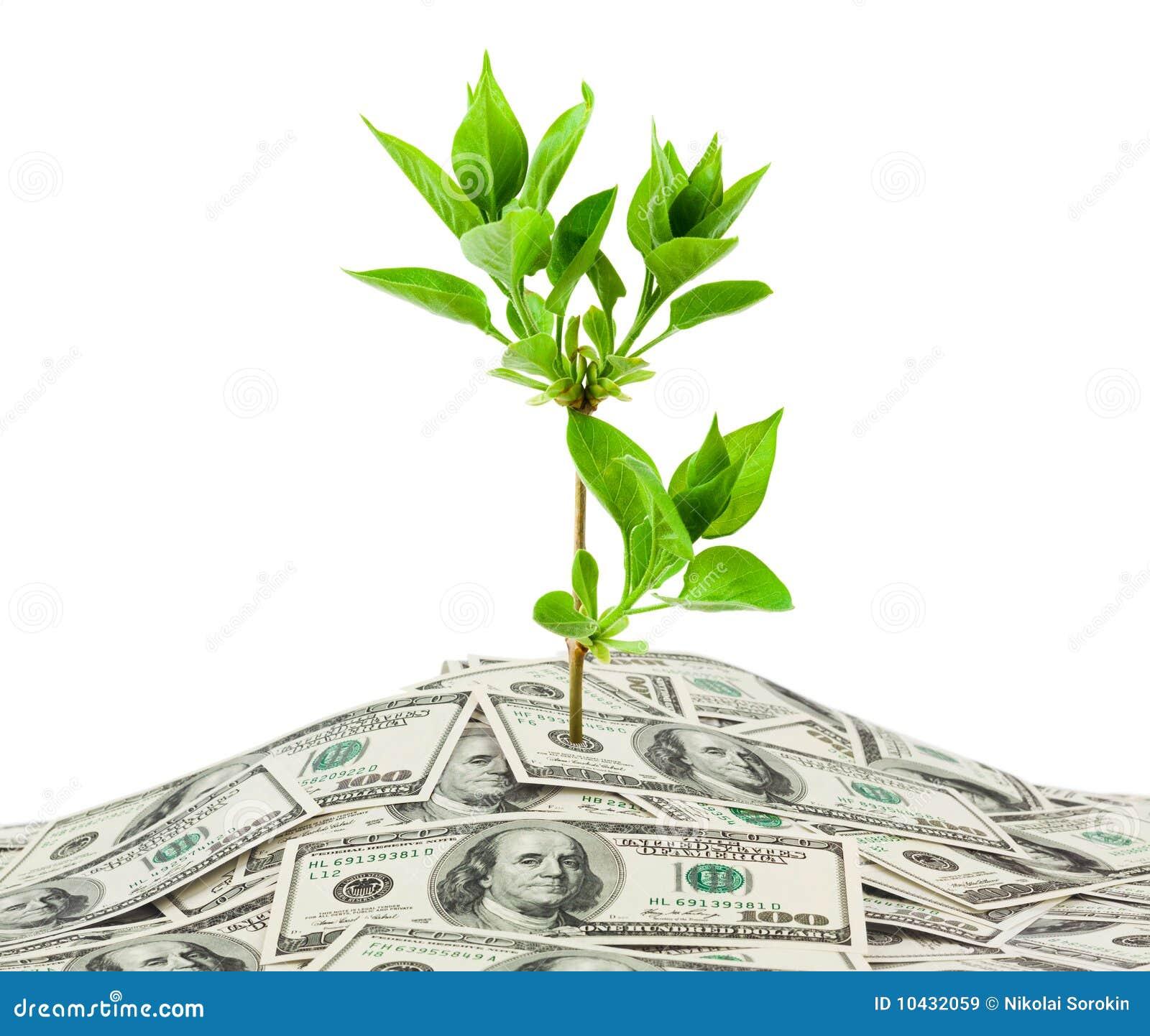 Dinero y planta