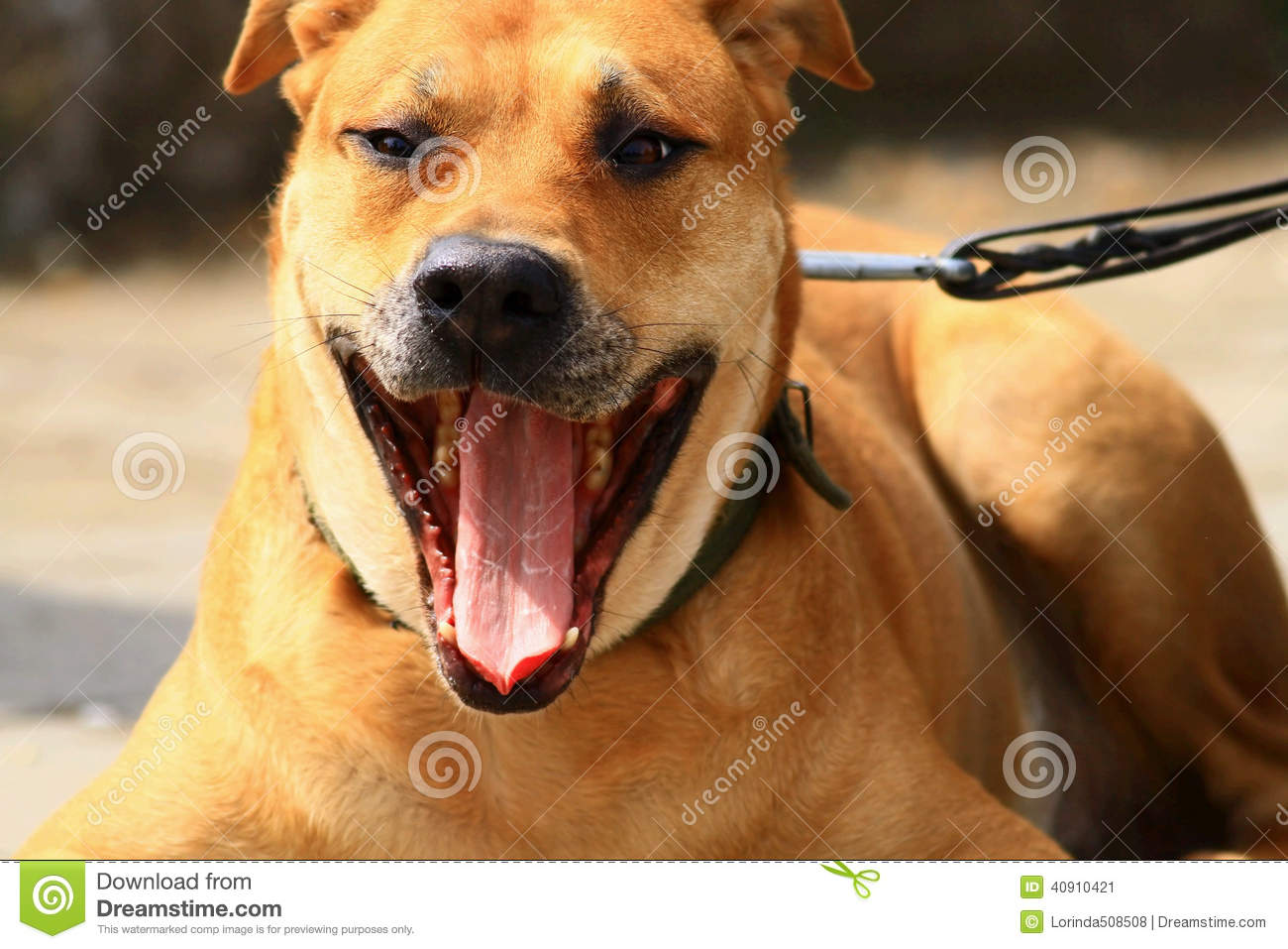 Dinky Dog Stock Image Image Of Silly Friendly Called 40910421