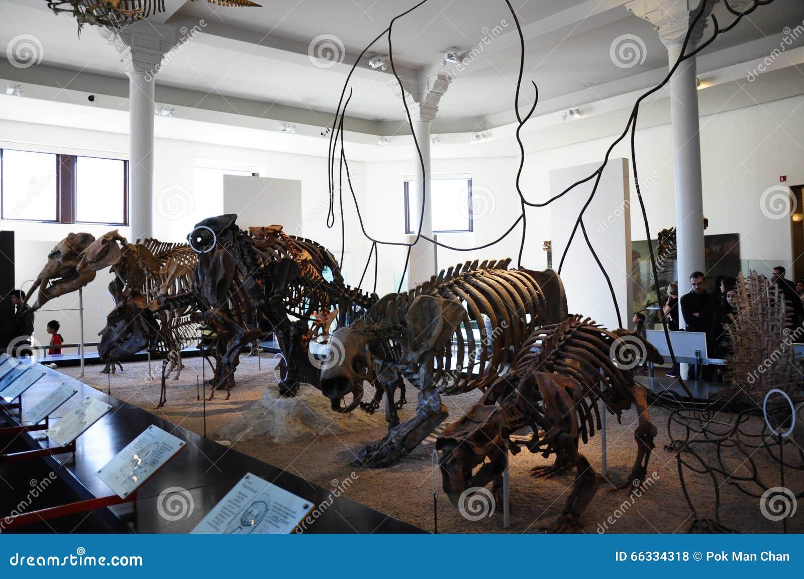 Museum Of Natural History Nyc Internship