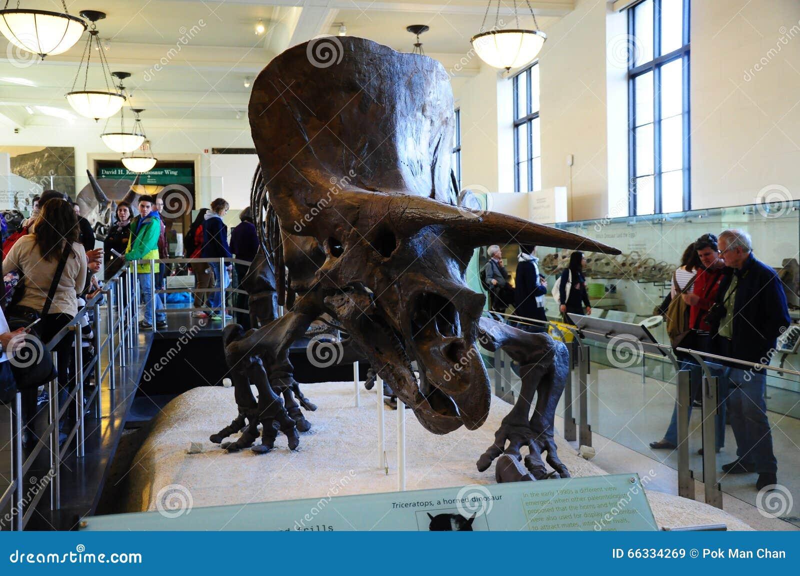 Natural History Nyc Dinosaurs