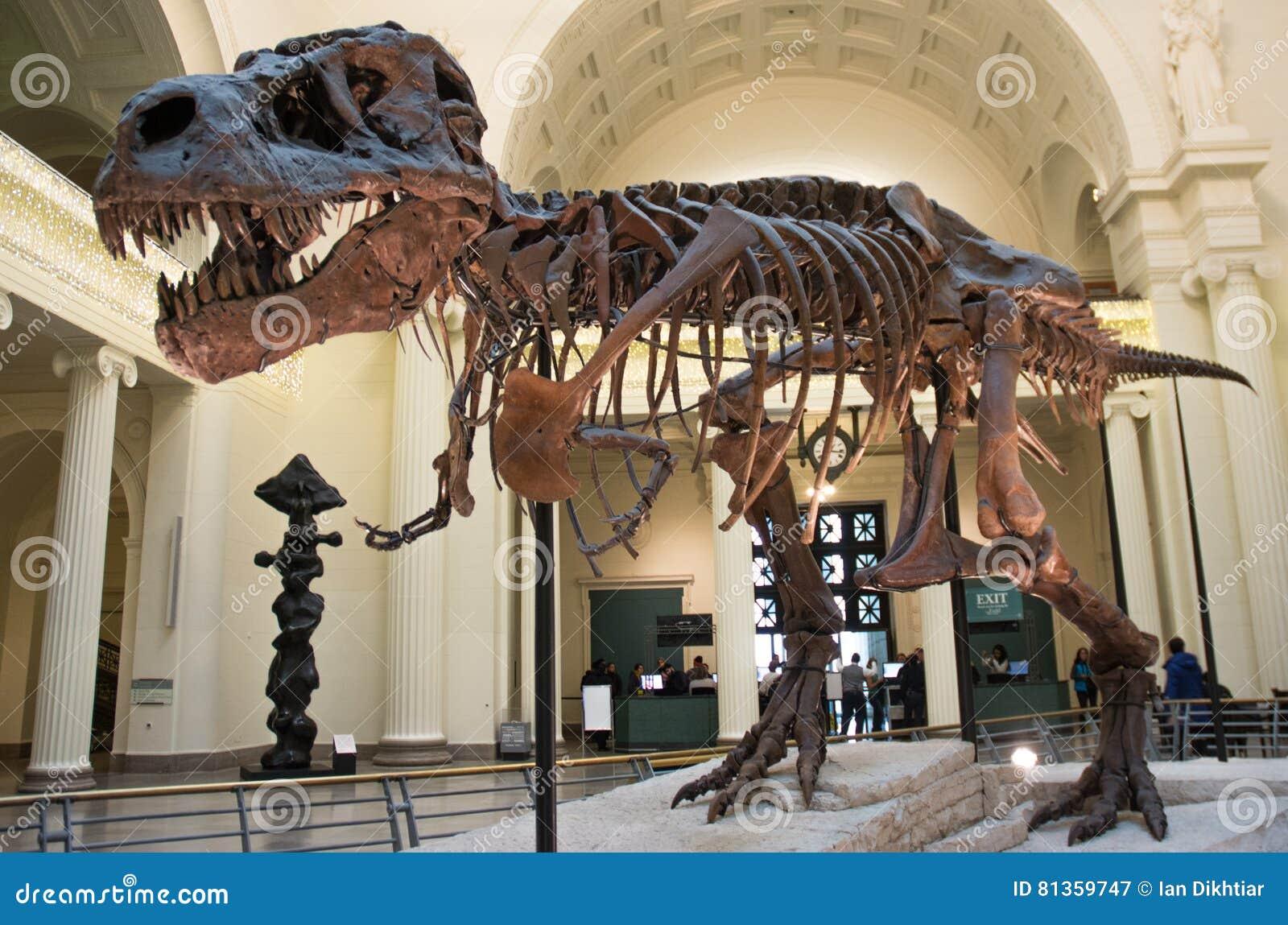 Dinosaur Skeleton Editorial Photo