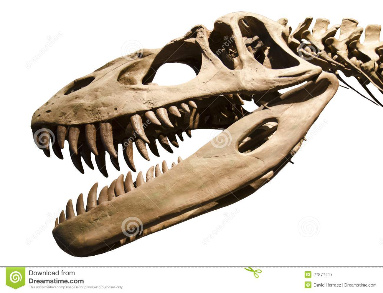 dinosaur skeleton over white isolated background royalty free stock photography
