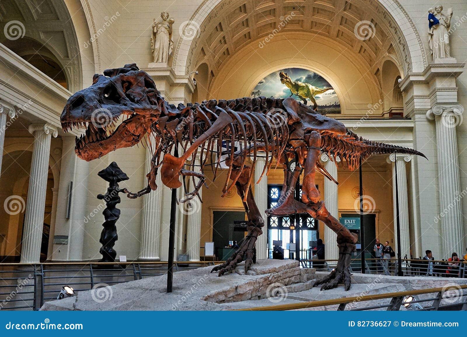 Dinosaur T Rex Display In The Field Museum Editorial