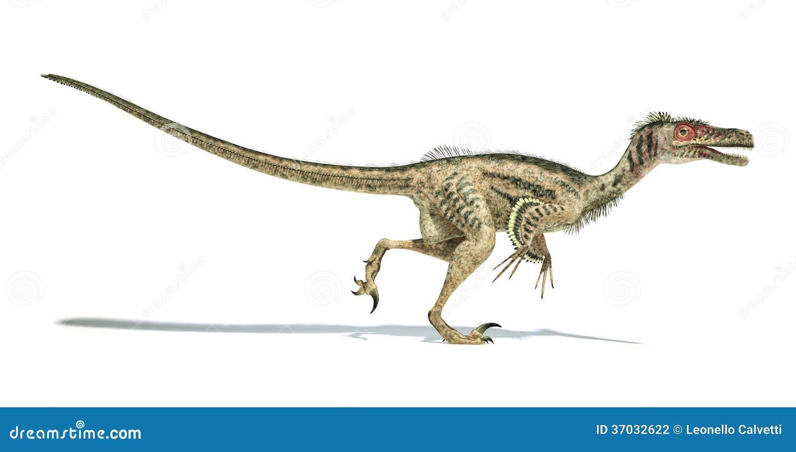 dinosaure de velociraptor scientifiquement correct avec des plumes photographie stock
