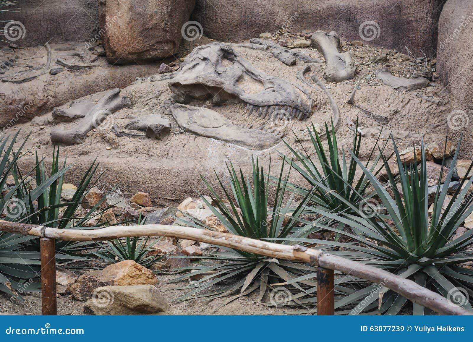 Download Dinosaures de disposition image stock. Image du restes - 63077239