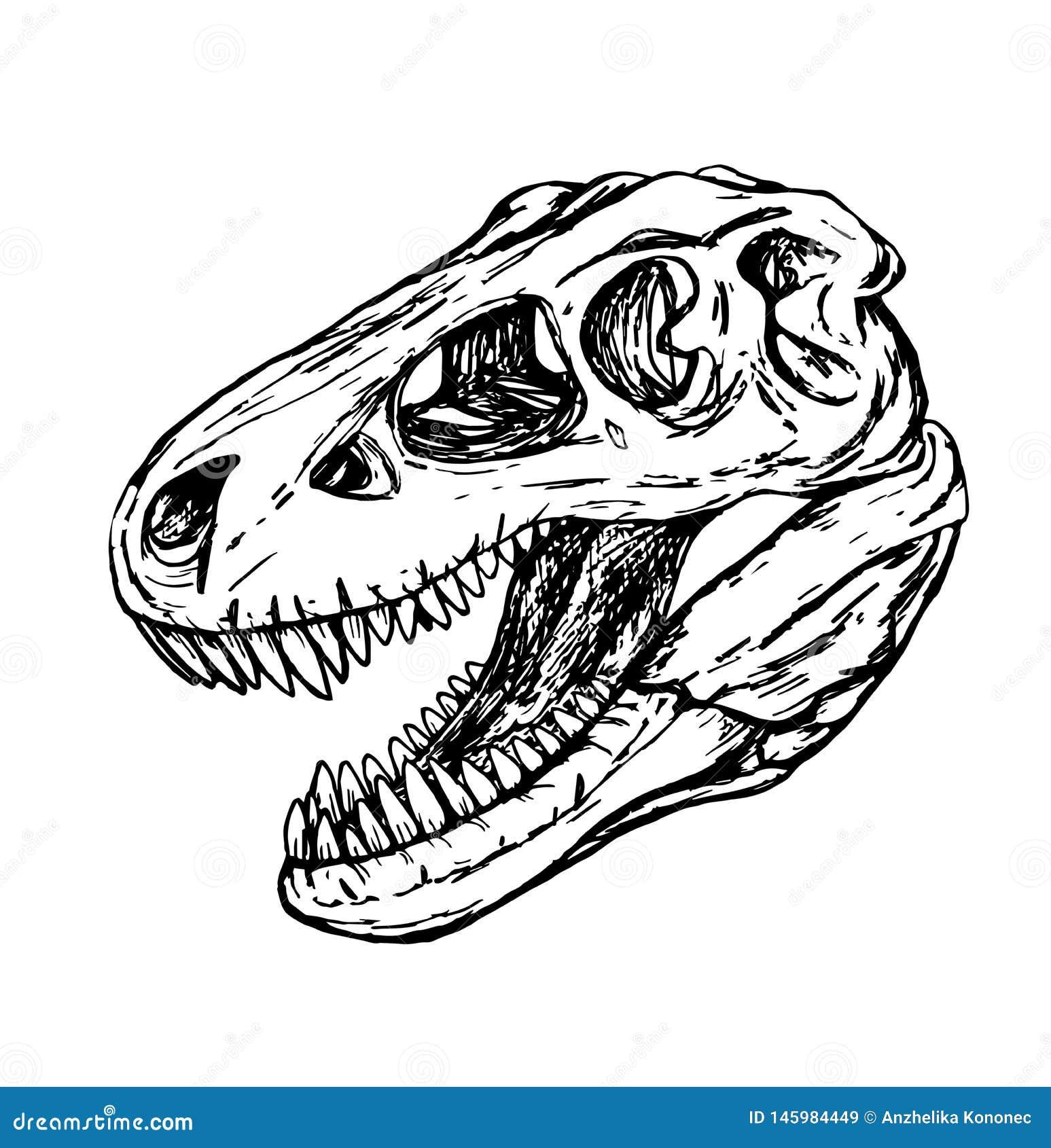Dinosaurushoofd van turexschedel