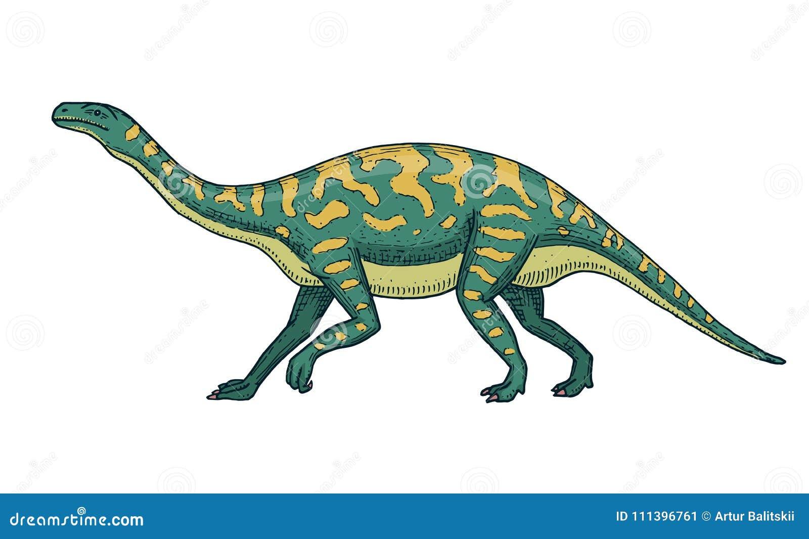 Dinosaurussen Barosaurus, Apatosaurus, Tenontosaurus Plateosaurus, brede hagedis, Massospondylus, Diplodocus, Brachiosaurus