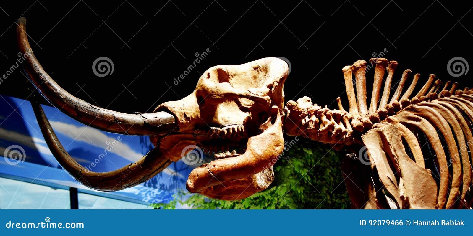 Dinossauro no museu da criação