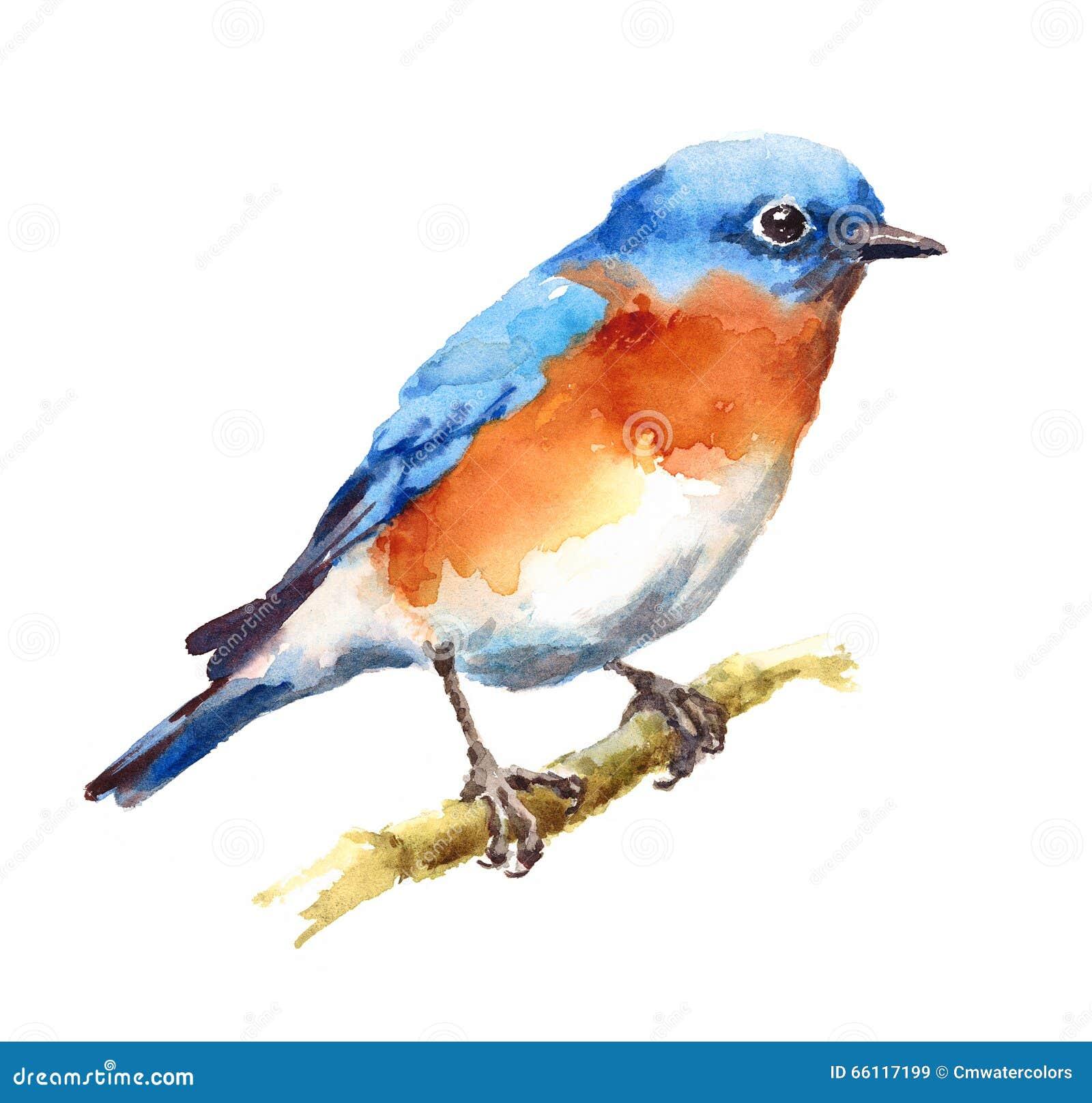 Dipinto a mano dell 39 illustrazione dell 39 acquerello dell for Uccellino disegno