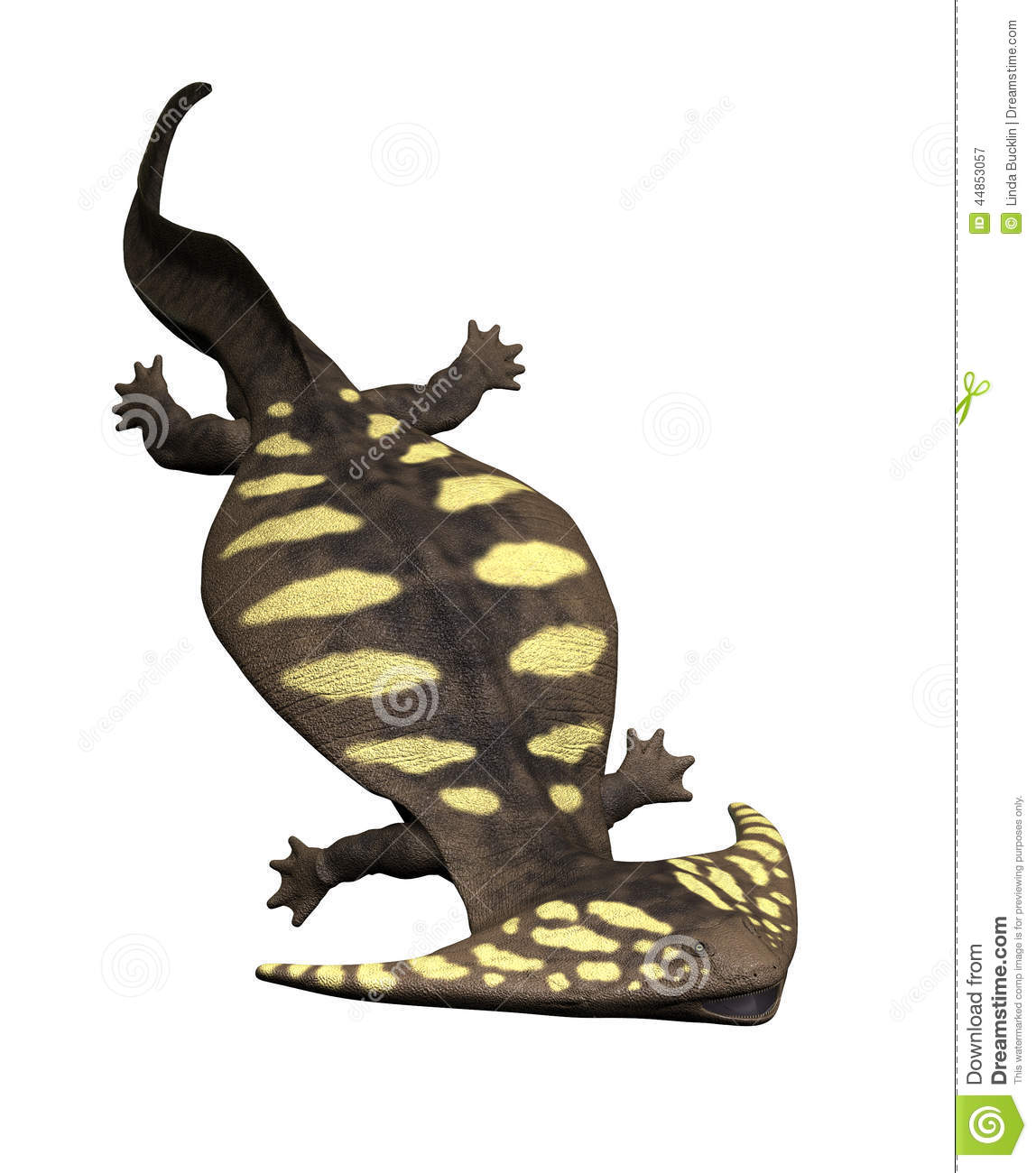 The diplocaulus was a large prehistoric salamander that lived during ...