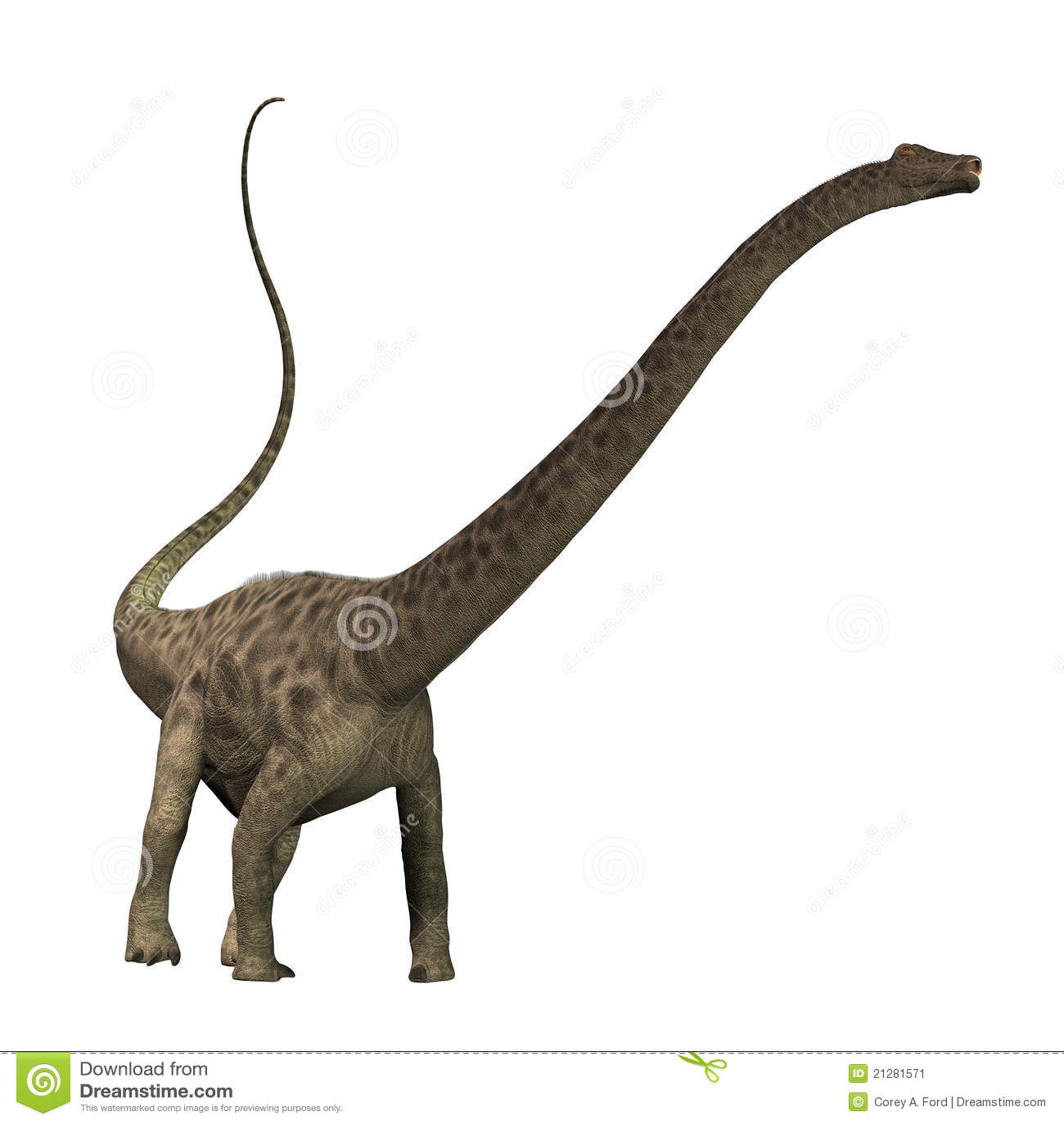 Diplodocus 01