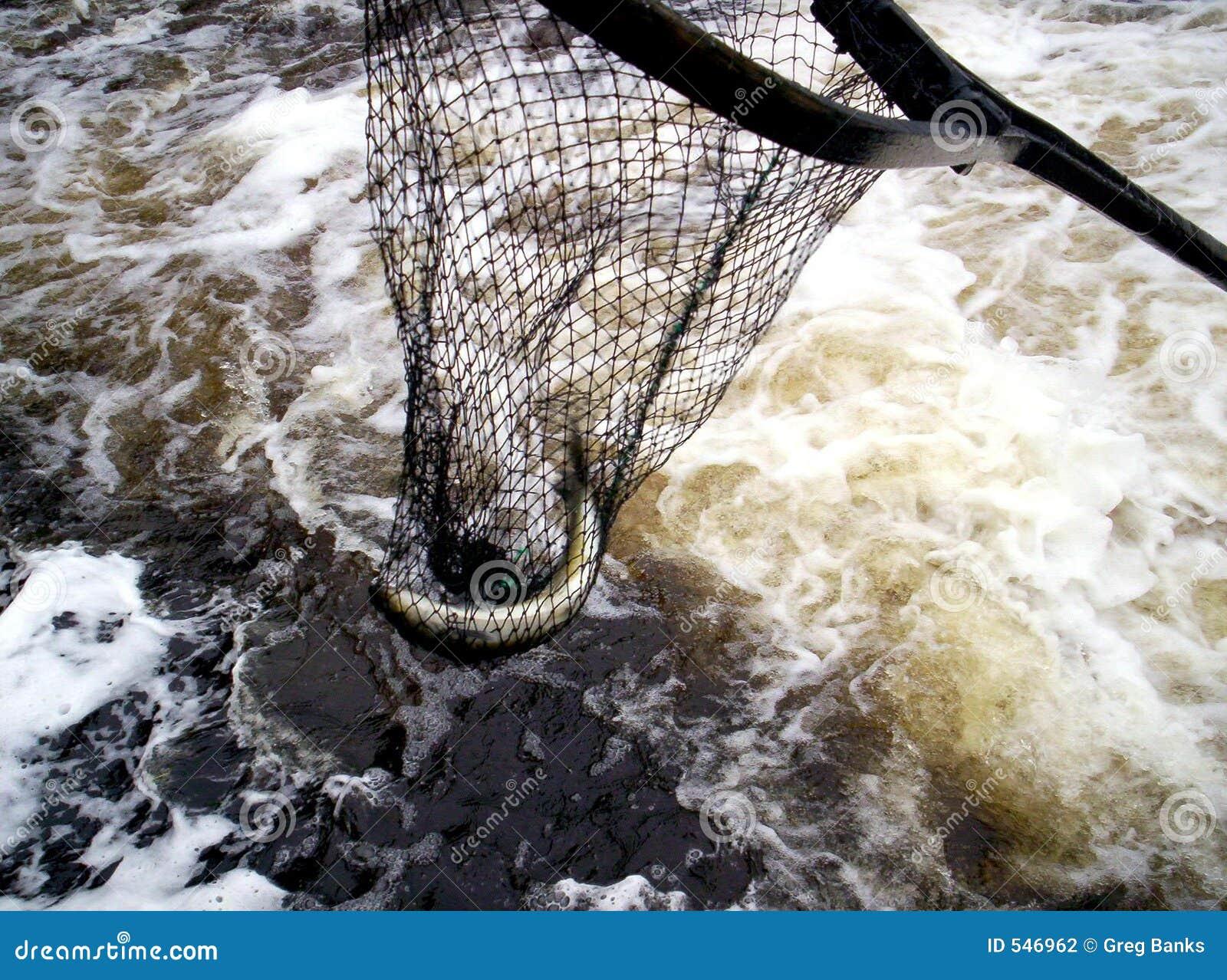 Download Dipnet鱼 库存照片. 图片 包括有 提供, 本质, 工作者, 浸洗, 工作, 商业, 瀑布, 行业, 职业 - 546962