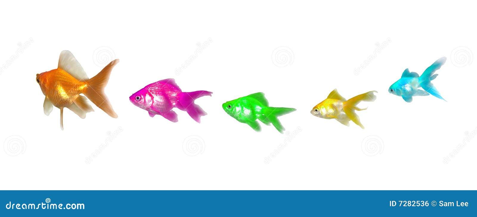 Dirección y diversidad de los Goldfishes