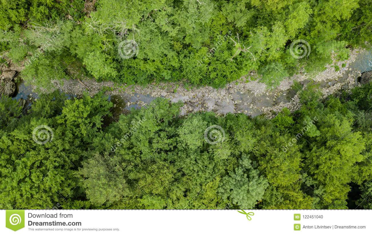 Aerial Top Down View Of Caucasus Mountains Forest Trees.