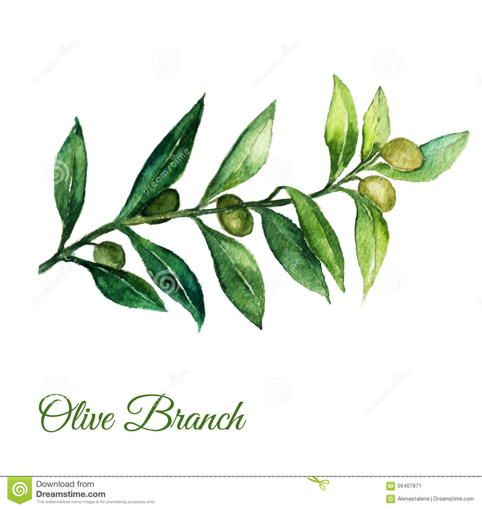 dirigez l 39 illusration tir par la main de branche d 39 olivier d 39 aquarelle avec les feuilles vertes. Black Bedroom Furniture Sets. Home Design Ideas