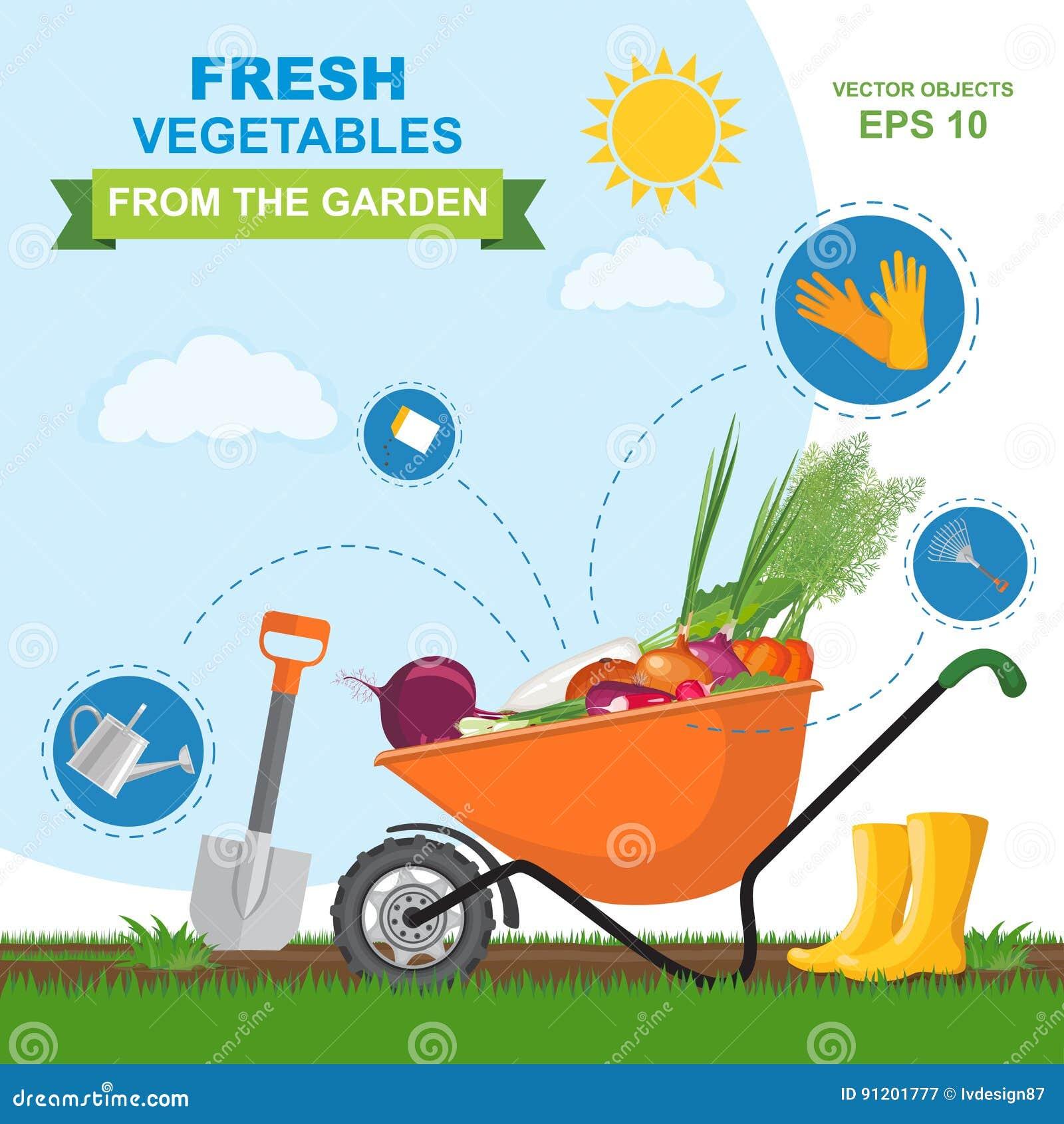 Dirigez l illustration de différents légumes frais, mûrs, délicieux du jardin dans la brouette orange Ensemble d icône de ki diff