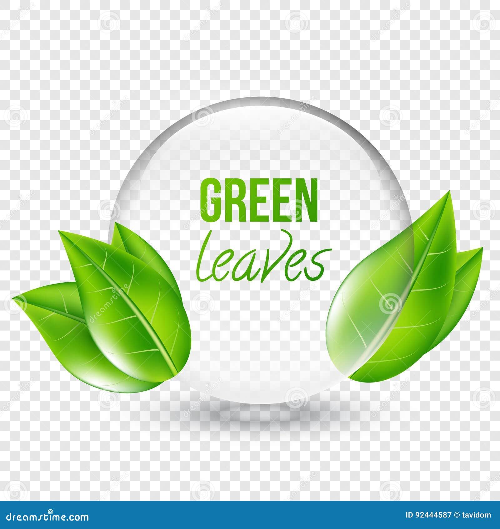 Le Shere Transparent Avec Vert Part Pour La Conception Cartes De Visite Professionnelle Illustration Vecteur Sur Fond