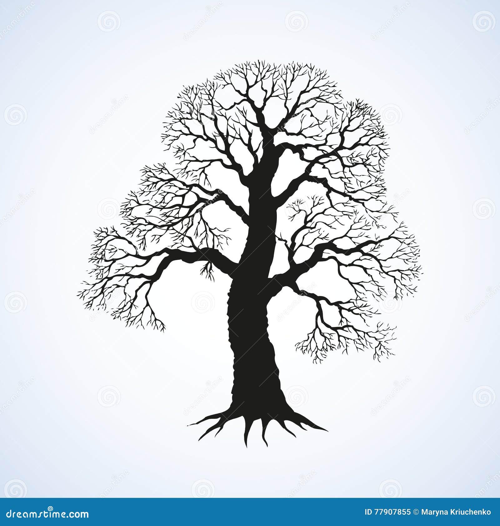 brancher l'arbre