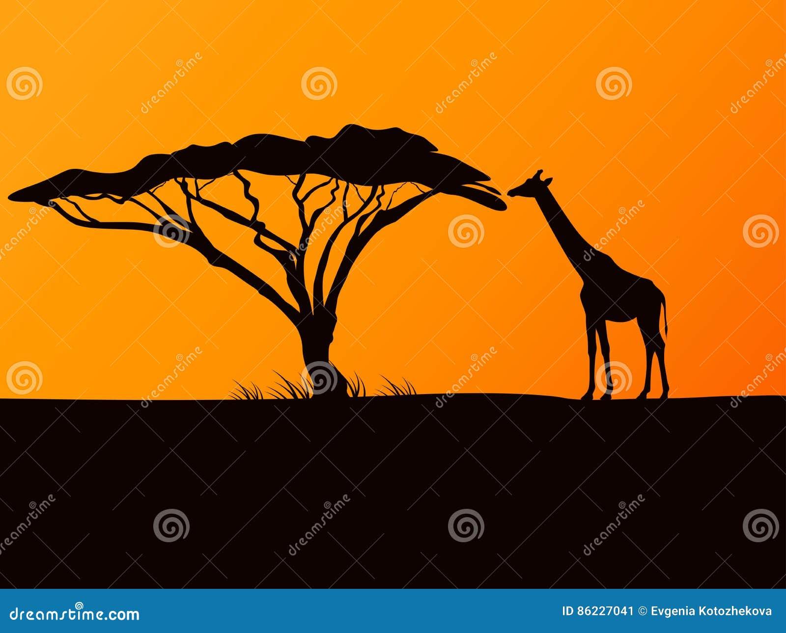 Dirigez la silhouette noire d 39 une girafe et d 39 un acacia for Prix d une girafe a poncer