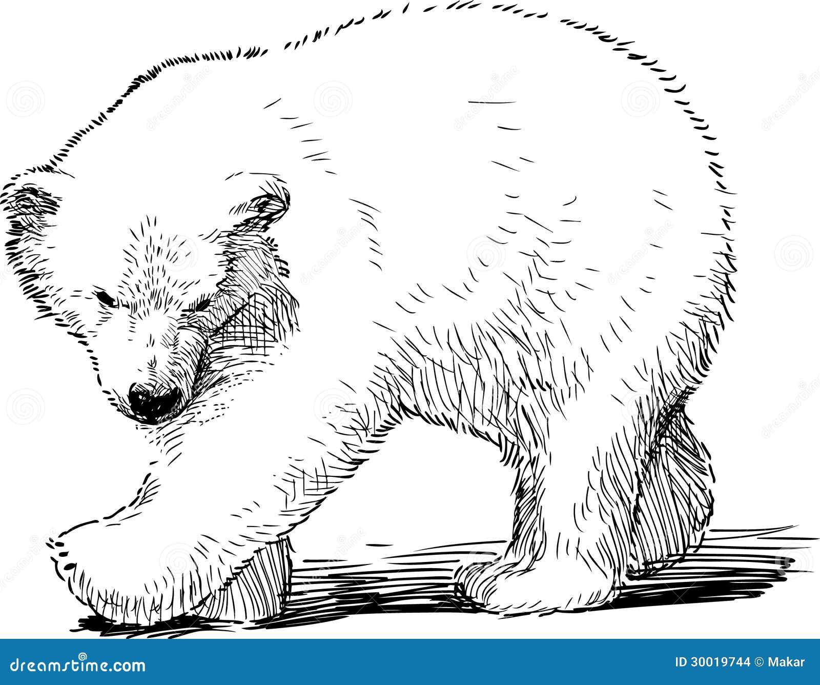 Petit ours blanc illustration de vecteur illustration du - Dessin d un ours ...