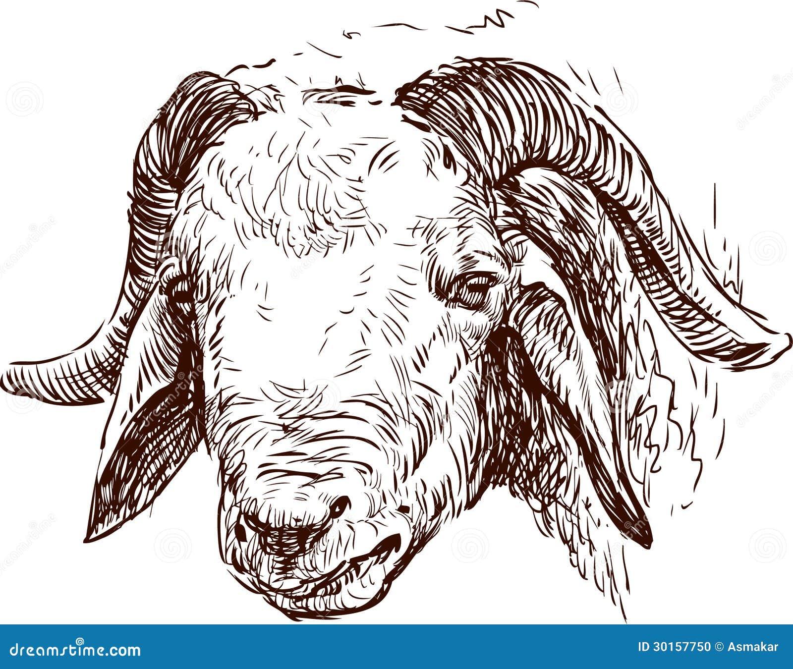 T te d une ram - Dessin tete de mouton ...