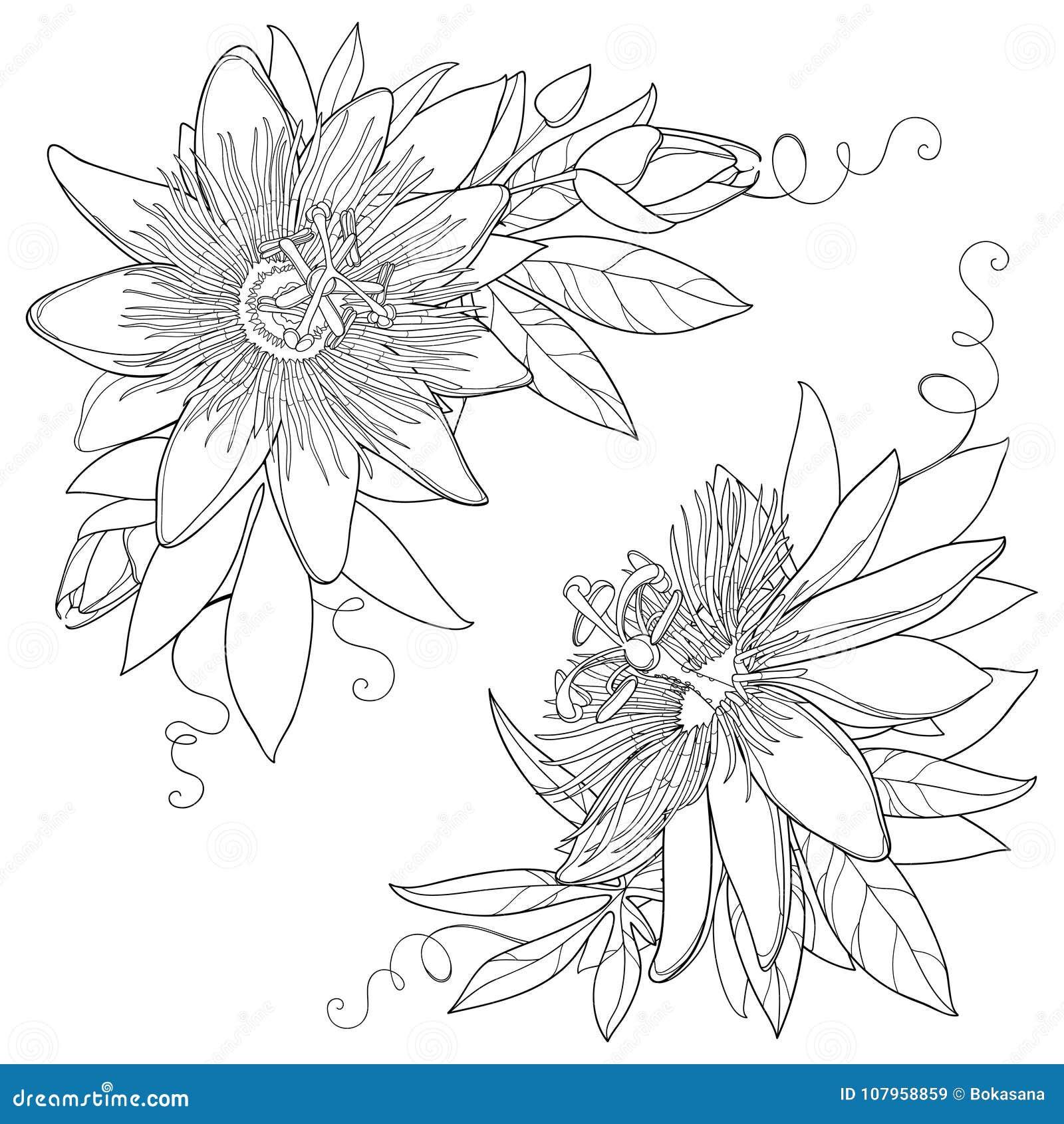 Dirigez Le Groupe Avec La Fleur Tropicale De Passiflore Ou