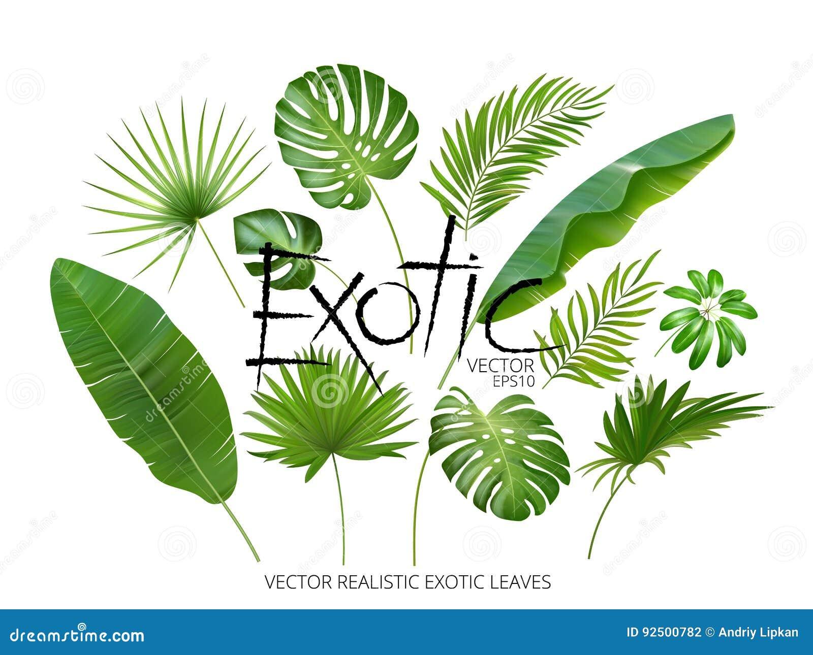 Dirigez les feuilles exotiques tropicales, feuilles réalistes de jungle réglées d isolement sur le fond blanc Collection en feuil
