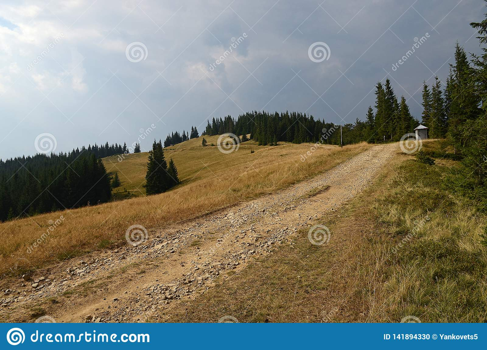 Dirt road high in the mountains among the tall pine trees against the blue sky.