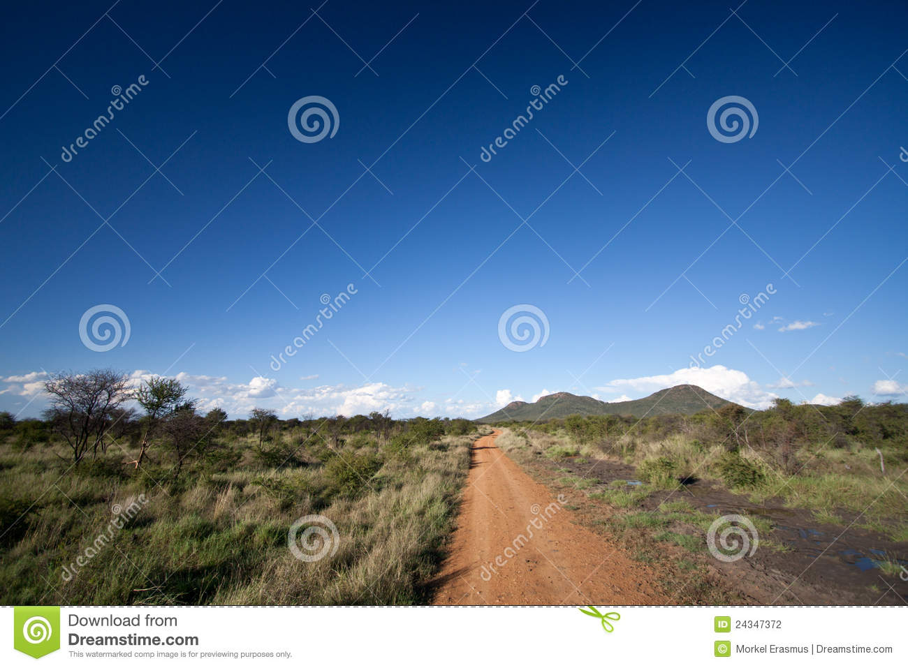 Dirt road leading into the African bush