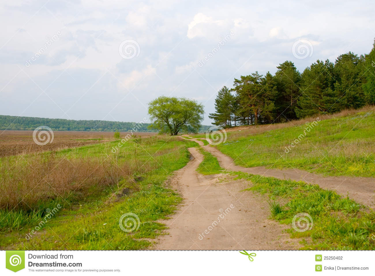 Dirt Road And The Old Oak Tree Stock Photography - Image: 25250402: dreamstime.com/stock-photography-dirt-road-old-oak-tree-image25250402