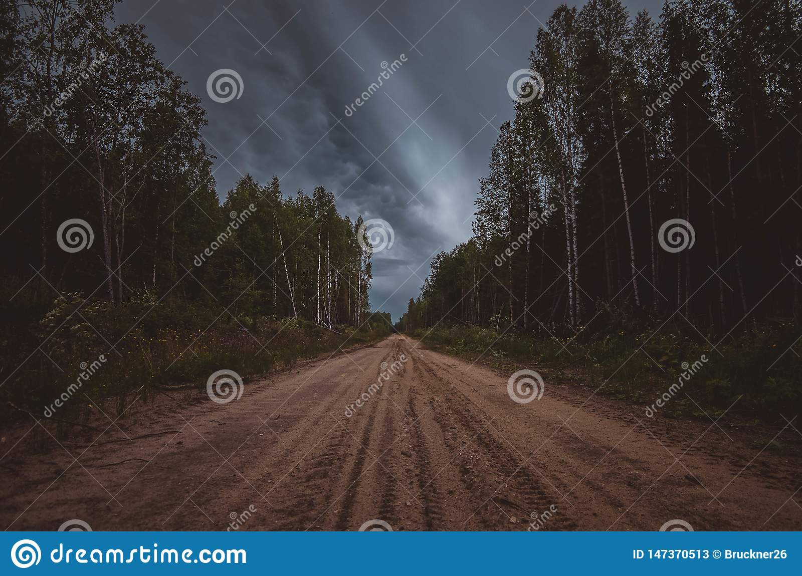 Dirt road in the woods.