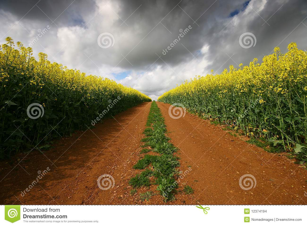 Dirt track through red soil and yellow crop stock images for Soil yellow color