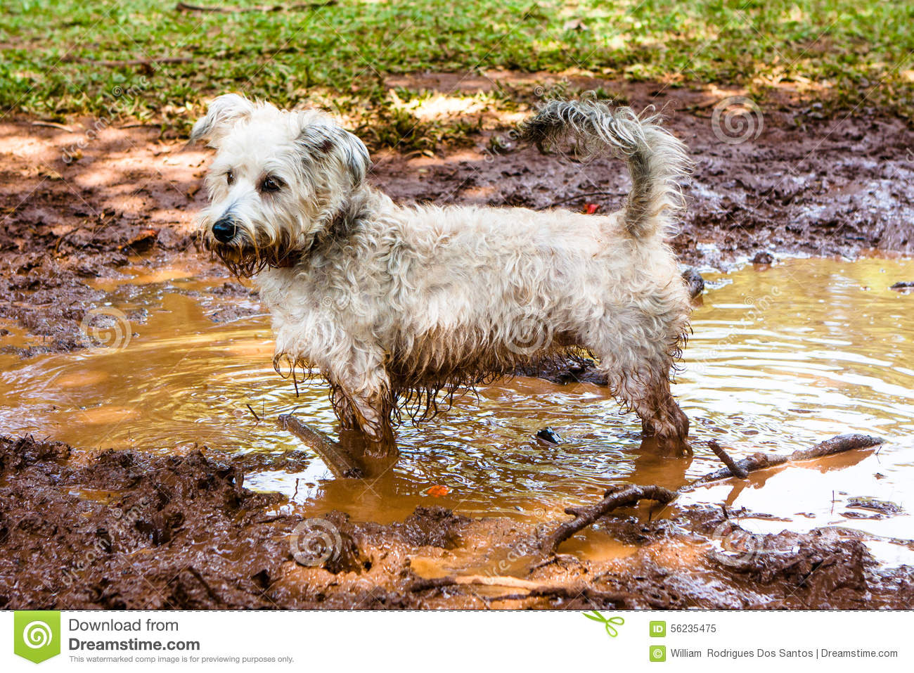 Dirty Dog Stock Photo ...