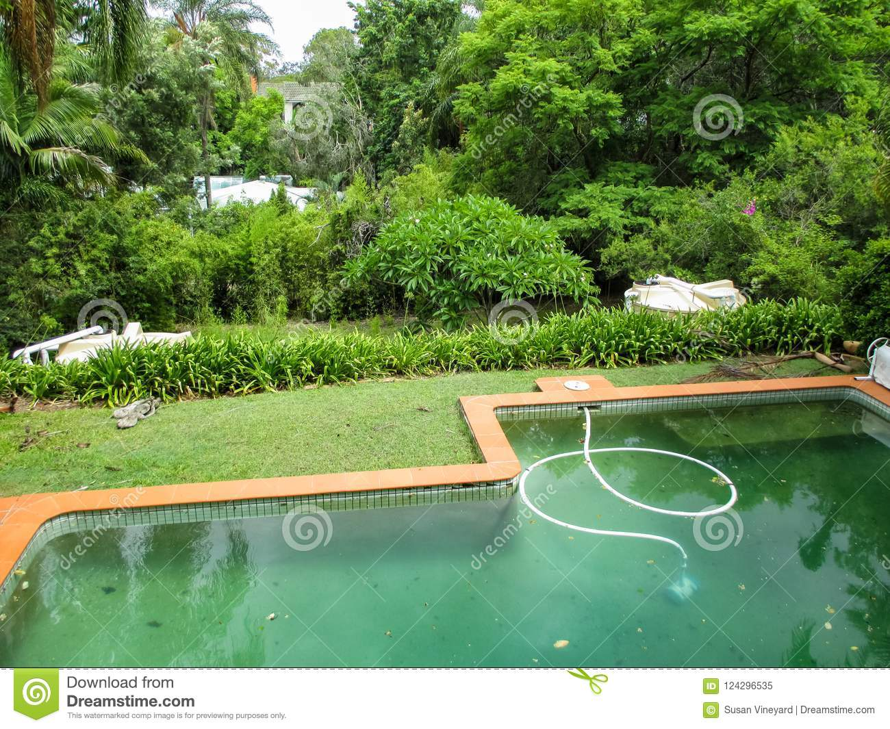 Dirty Green Swimming Pool With Vaccum In It In Very Green Tropical ...