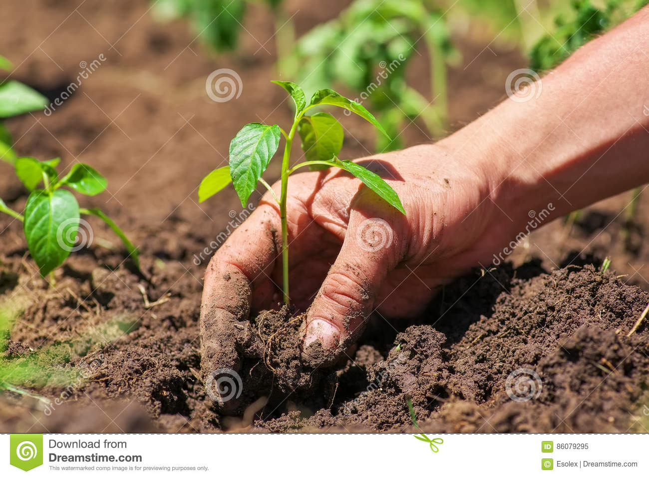 Dirty Male Hands And Ground Plant Stock Image - Image of branch ...